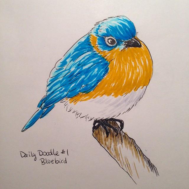 No.1 - Bluebird#dailydoodle #bluebird #bird #sketch