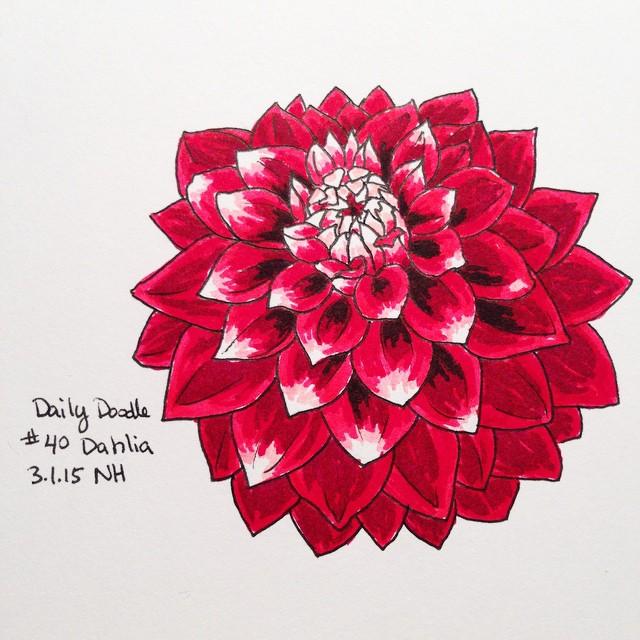 No.40 Dahlia #dailydoodle #doodle #sketch #flower #dahlia