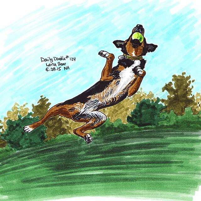 No.124 Lana Bear patreon.com/creation?hid=2536716 #Dailydoodle #doodle #sketch #drawing #art #dog #kelpie #fetching #jumping #happydog #birthdaydog