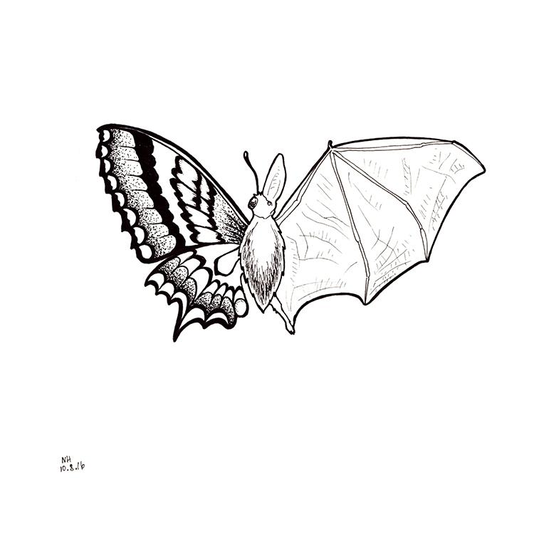 207-batterfly